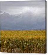 Wheat Field And Storm Canvas Print