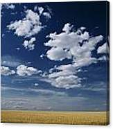 Wheat Field, Central Washington Canvas Print