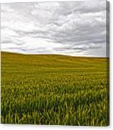 Wheat Field Homestead Canvas Print