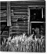 Wheat To Meet  Canvas Print