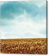 Wheatfield And Cloudy Sky Canvas Print