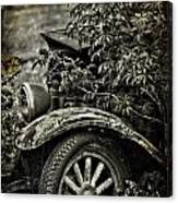 Wheels And Roots  Canvas Print