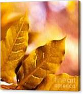 When Leaves Turn Gold Canvas Print