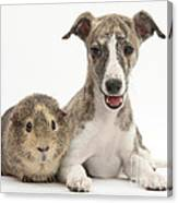 Whippet Pup With Guinea Pig Canvas Print