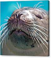 Whiskers Of A Seal Canvas Print
