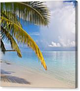 Whispering Palm On The Tropical Beach Canvas Print