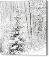 Whispers The Snow Canvas Print