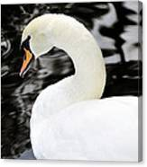 Whistling Swan Canvas Print