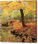 White Ash And Stream In Autumn Canvas Print