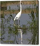 White Bird At June Lake Canvas Print