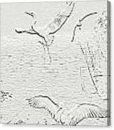 White Birds Canvas Print
