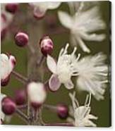 White Blooming Flowers Canvas Print