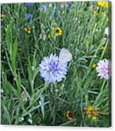 White Butterfly On Purple Flower Canvas Print