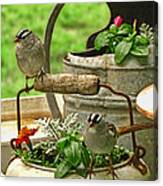 White Crowned Sparrows On The Flower Pot  Canvas Print