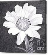 White Daisy Flower Canvas Print