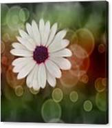 White Daisy In A Sunset Canvas Print