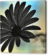 White Daisy Silhouette Canvas Print