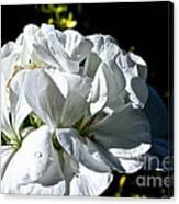 White Dew Canvas Print