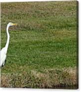 White Egret Crane Canvas Print