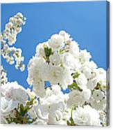 White Floral Blossoms Art Prints Spring Tree Blue Sky Canvas Print