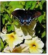 White Flower Butterfly Canvas Print