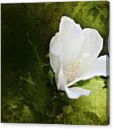 White Flower Texture Canvas Print