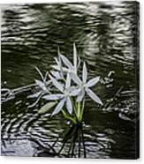 White Flowers In The Stream Canvas Print