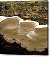 White Fungus Canvas Print