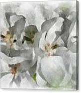 White Geraniums - Watercolor Canvas Print
