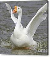White Goose Canvas Print