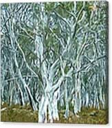 White Gum Forest Canvas Print