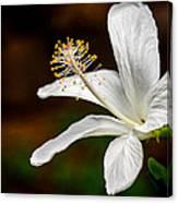 White Hibiscus II Canvas Print