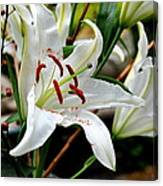 Mother's Day  Lilies  Canvas Print