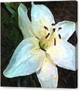 White Lily Listening Canvas Print