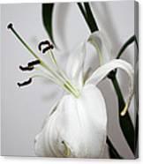 White Lily Portrait Canvas Print