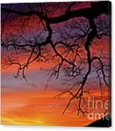 White Oak Sunrise Canvas Print