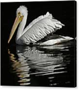 White Pelican De Canvas Print