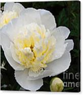 White Peony Flowers Series 1 Canvas Print