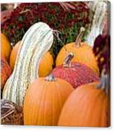 White Pumpkin  Canvas Print