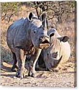 White Rhinoceros Canvas Print