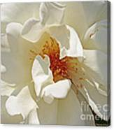 White Rose Stemens Canvas Print