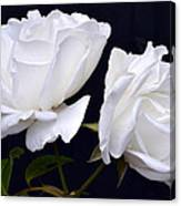 White Rose Twins. Canvas Print