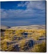 White Sands Golden Grass Canvas Print