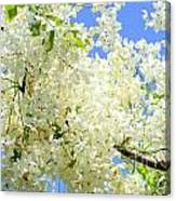 White Shower Tree Canvas Print