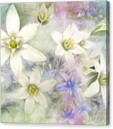 White Stars II Canvas Print