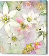 White Stars IIi Canvas Print