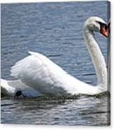 White Swan On A Lake Canvas Print