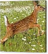 White Tailed Deer Fawn In Field Of Canvas Print