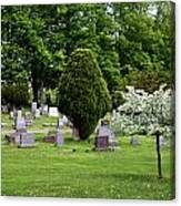 White Tree In Cemetery Canvas Print