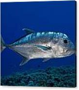 White Ulua Canvas Print